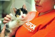 ASPCA Worker With Kitten